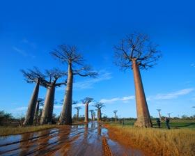 马达加斯加旅游攻略图片