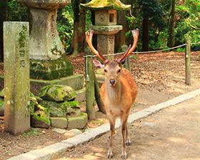 奈良旅游攻略图片