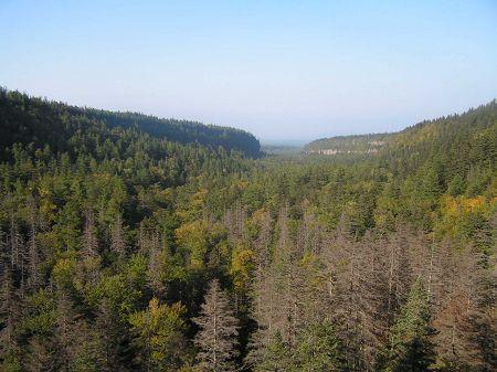 长白山地下森林