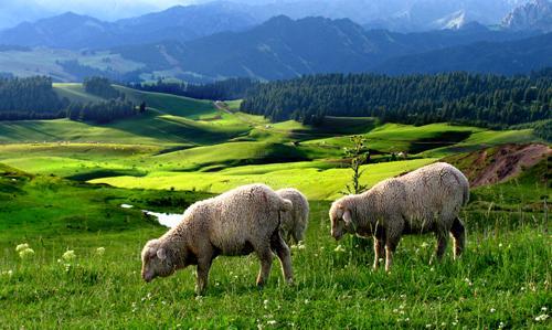 杜氏旅游景区 哈熊沟 普氏野马场 卡拉麦里有蹄类… 呼图壁公园 西