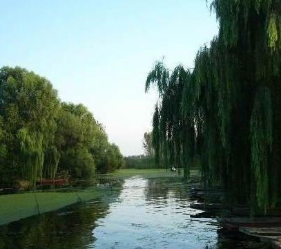 滨州夏天风景图
