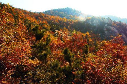 吉祥平安的树林风景