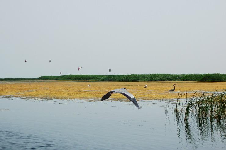 乌梁素海旅游景点图片