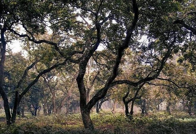 张坝桂圆林旅游攻略_门票_地址_游记点评,泸州旅游
