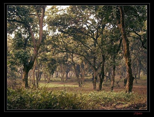 壁纸 风景 森林 桌面 537_410