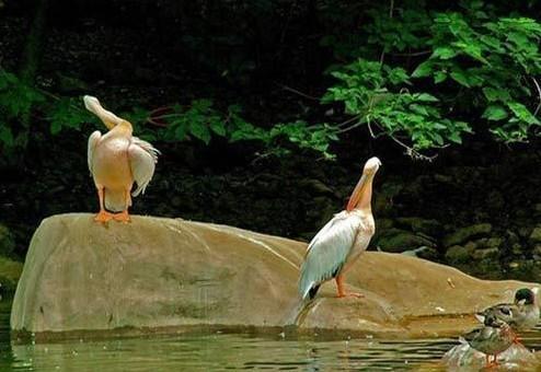 野生动物园旅游景点图片