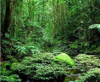 白水岭热带森林图片