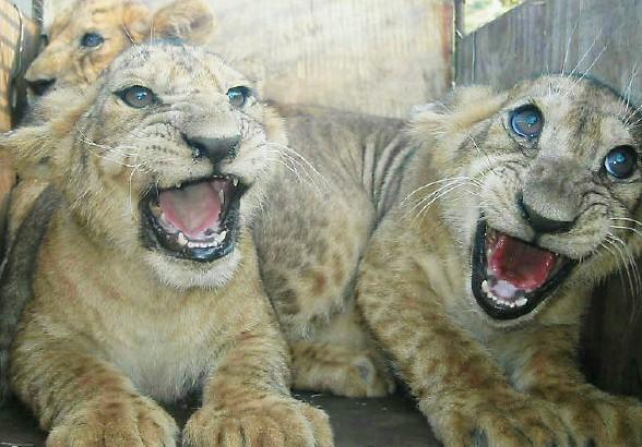 黄岛野生动物园,点评/门票/地址/旅游景点介绍